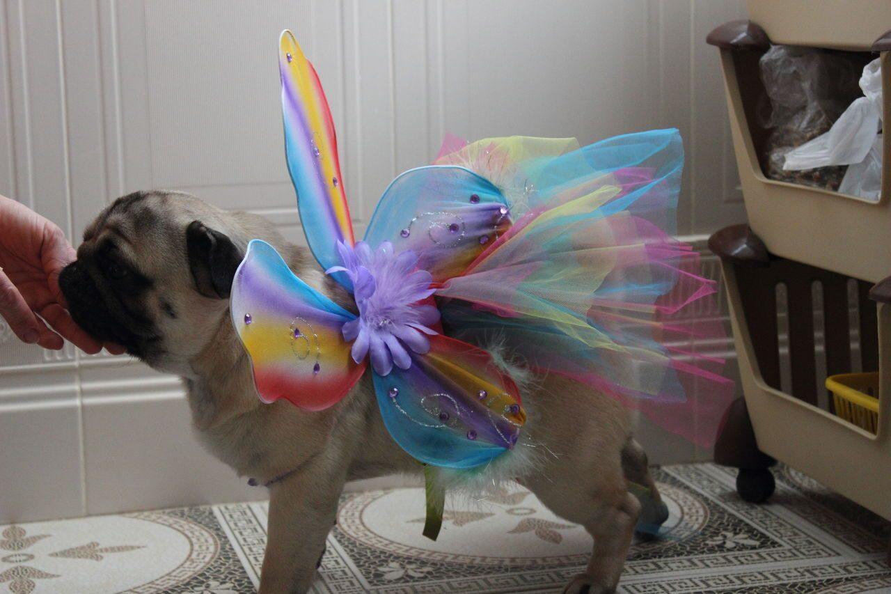 Карнавальные костюмы для животных Магазин - photo#36
